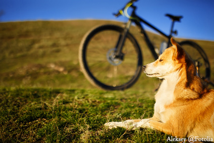 sitting dog and mountain bicycle with field and blue sky background
