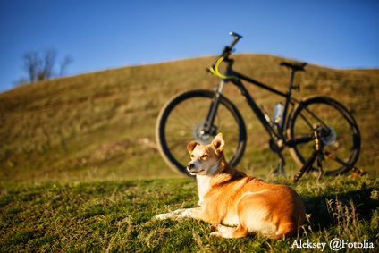 sitting red dog and mountain bicycle with greenfield background