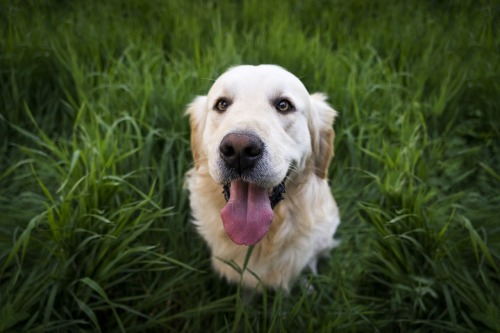 gras-fressen-bei-hunden