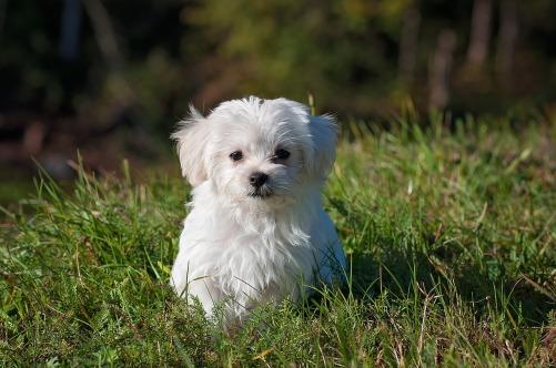 Gras-fressen-beim-Hund