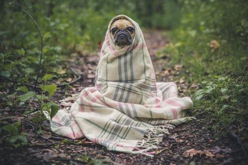Hund-Schilddrüsenprobleme-Schilddrüse-Hundetraining