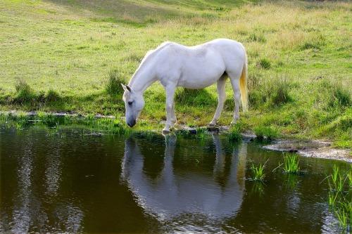 pixabay-pferd-pferdeweide-hitzschlagbeimpferd-pferdeblog-hitze-